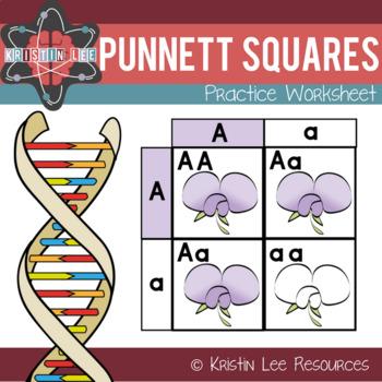Punnett Practice Worksheets & Teaching Resources | TpT