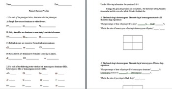Punnett Square Practice Worksheets with Answer Keys