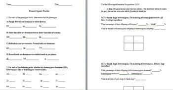 Punnett Square Worksheets Answer Sheet - punnett square worksheets ...