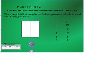 Punnett Square Practice for the Smartboard