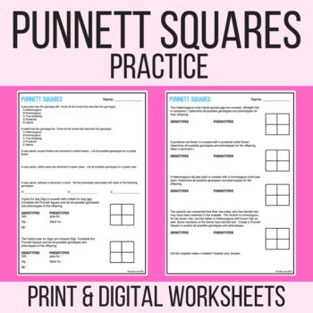 Punnett Square Practice or Quiz