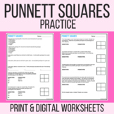 Punnett Square Practice or Quiz
