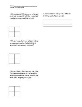Punnett Square Practice sheet