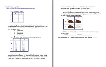 Aim: How can we use Punnett Squares to determine genetic ratios?