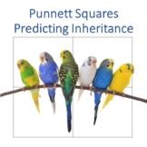 Punnett Square Presentation and Practice 2020