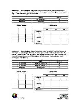 Punnett Square Probability Lab (Worksheet)