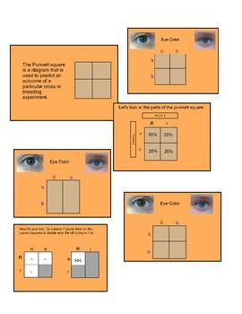 Punnett Square SMART lesson