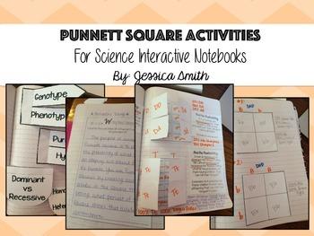 Punnett Square Interactive Notebook