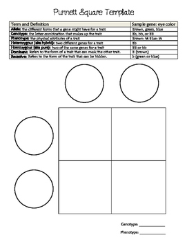 Punnett Square Template and Vocabulary