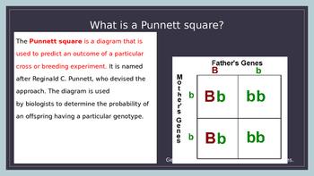 Punnett Square Vocabulary Slides