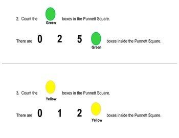 Punnett Square Workbook