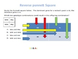 Punnett Square and Heredity Skills Made Easy
