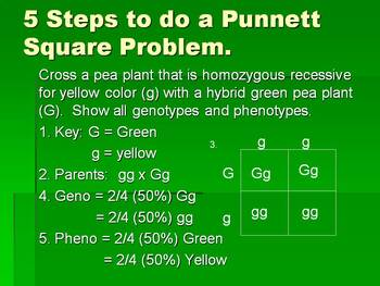 Punnett Square and Probability Presentation