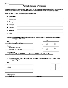 punnett square worksheet by aussie science teacher tpt. Black Bedroom Furniture Sets. Home Design Ideas