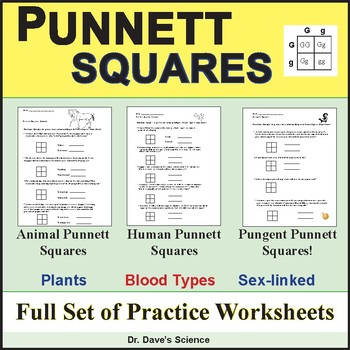 Punnett Squares Worksheets and Practice