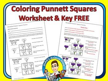 Punnett Squares Coloring Worksheet - Mendelian FREE