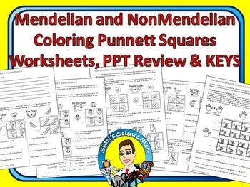 Punnett Squares Coloring Worksheets - Mendelian and NonMendelian