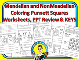Punnett Squares Coloring Worksheets - Mendelian and NonMendelian