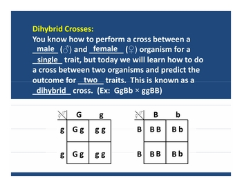 Punnett Squares: Dihybrid Crosses PowerPoint Lesson Plan