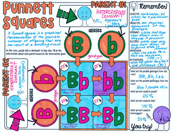 PUNNETT SQUARES DOODLE NOTES, INTERACTIVE NOTEBOOK, MINI ANCHOR CHART
