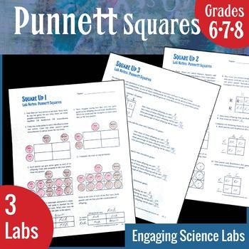 Punnett Squares—Gene Sorting and Expression—3 Worksheets