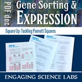 Genetics: Punnett Square Activity Worksheets—Gene Sorting and Expression