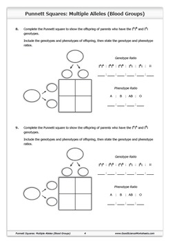 Punnett Squares - Multiple Alleles (Blood Groups)