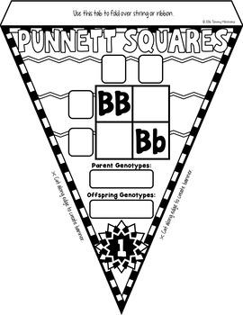 Punnett Squares Pennant Flags