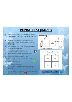 Punnett Squares Poster