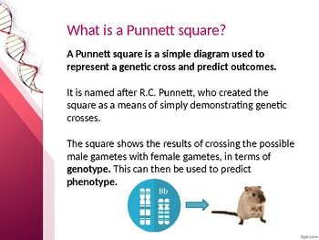 Punnett Squares PowerPoint with questions