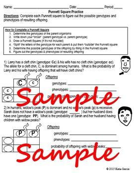Punnett Squares Practice - Genetic Problems