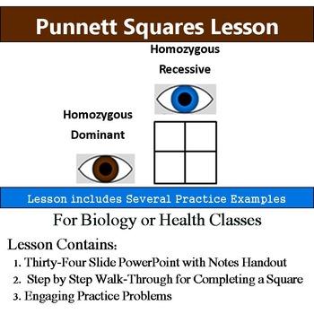 Punnett Squares - Practice Homozygous & Heterozygous - Handout & Activity