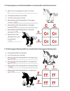 Punnett Squares: Punnett Square Mendelian Genetics Activity (Punnet Squares)