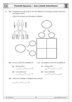 Punnett Squares - Sex-Linked Inheritance