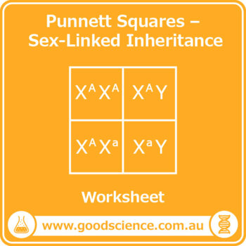 Punnett Squares - Sex-Linked Inheritance