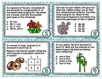 Punnett Squares Task Cards