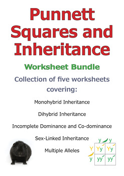 Punnett Squares and Inheritance [BUNDLE - Save 20%]