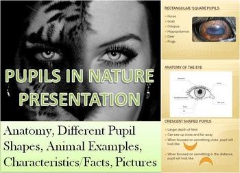 Pupils In Nature Presentation