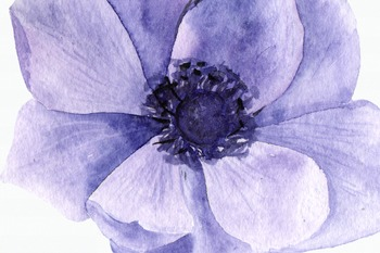 Purple Anemone Watercolor Clip Art Set + Wreath