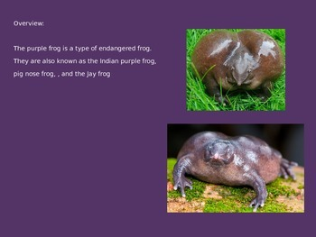 Purple Frog - Power Point - information facts pictures
