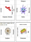 Puzzle Review Cell Vocabulary