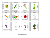 Puzzle Review - Flowering Plants Vocabulary