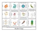 Puzzle Review - Fungi and Protizoa