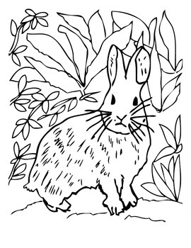 ANiTAiLS:Pygmy Rabbit Story, Crossword, Coloring Page and More
