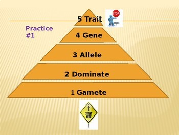 Pyramid Review Game: Genetics