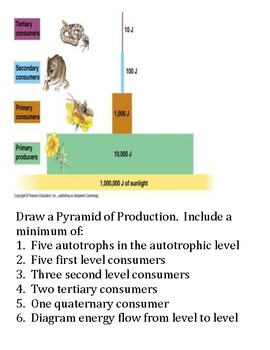 Pyramid of Production Assignment