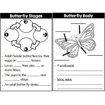 QR Code Centers: Butterfly Life Cycle