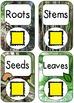 QR Code Listening Centers: Parts of Plants Nonfiction Set