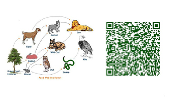 QR Codes Food Webs, Ecosystem, Cells, Body Systems, Relati