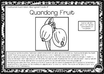 QUANDONG FRUIT (Trad Australian Aboriginal food) 1 pg info & coloring sheet